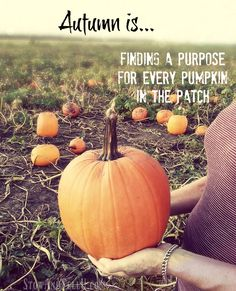 Autumn is finding purpose in every pumpkin in the patch and more pumpkin patch musings and ramblings. Pumpkin Farm, Cute Pumpkin, Pumpkin Quotes, Cinnamon Donuts, Pumpkin Pictures, October Country, Berry Picking, Photo Caption, Green Gables