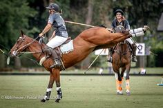 Polo Horse, Sport Of Kings, Polo Club, Horse Girl, Horse Pictures, Horse Photography, Horse Riding, Beautiful Horses, Equestrian