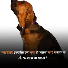 Funny Facts Mind Blowing In Hindi Gernal Knowledge In Hindi, General Knowledge Book, Gk Knowledge, Knowledge Quotes, Some Amazing Facts, Interesting Facts About World, Wow Facts, Weird Facts, Fun Facts About Earth
