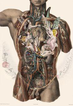 FFO Art: Nouveau Meets Anatomy: tumblr_n434z4nCiT1sec6tao1_500.jpg