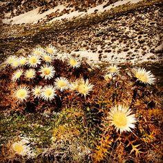 Ridiamo con il sole. Non servono parole per capire, non serve nient\'altro per essere come i fiori...