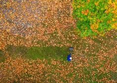 A drone picture of a man raking autumn leaves under a maple tree in Brandenburg, Germany