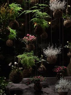 kokedama of japanese string gardens