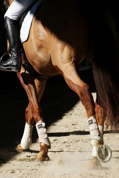 Ah, for that to be my foot in the stirrup.  The beauty and power of that horse!  What a privilege.
