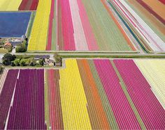 Tulip fields. I want to go.