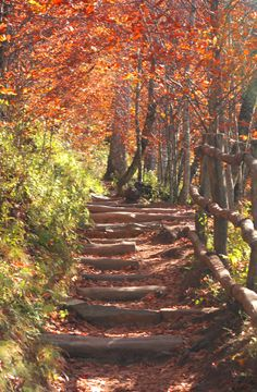 appalachian-trail-at-newfound-gapjpg/