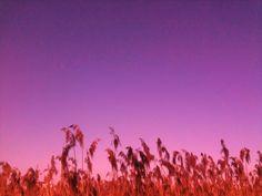 FLUSSAUEN/Lauschen Schilfes Rauschen/G-Moll Melodie/meisterlich der Geigenbogen/streicht die Saiten unsrer Zeit/Laufen diese Runde/enden sollt es nie/werfe Münzen in die Luft/Wind weht an dein Kleid    ernst bohne 2012 (Text/Foto)