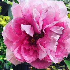 Flowers, Instagram Posts, Plants, Floral, Plant, Royal Icing Flowers, Florals, Flower, Planting