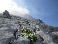 Alta Badia, fiori coraggiosi nelle rocce delle Dolomiti