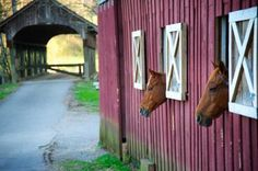 Love the horses and the covered bridge in the background
