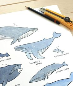 Whale Drawing, Whale Painting, Watercolor Whale, Whale Species, Whale Illustration, Cute Whales, Wale, Whimsical Fashion, Draw