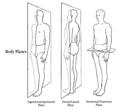 BodyPlanes - ever wonder what a trainer is talking about when they say 'moving through the saggital'?  A simple diagram for understanding the planes of movement.  Enjoy.    trainandalucia.com