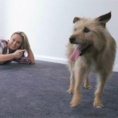 The Home Team Pet Friendly Carpet