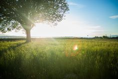 🔝 Nature sky summer sun - get this free picture at Avopix.com    ☑ https://avopix.com/photo/33386-nature-sky-summer-sun    #field #landscape #meadow #grass #sky #avopix #free #photos #public #domain
