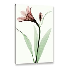 Robert Coop Lily I Graphic Art on Wrapped Canvas