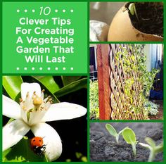 10 Clever Tips For Creating A Vegetable Garden That Will Last