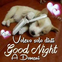 magiche immagini buonanotte per gli amici (4) Good Night Sleep Well, Puppy Quotes, Puppy Cuddles, Really Cute Puppies, Puppy Care, Puppy Breeds, Cool Pets, Love You More, Little Dogs