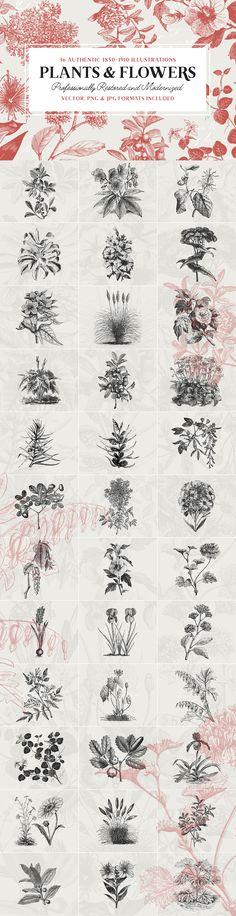 36 Plant & Flower Illustrations by Vector Hut on @creativemarket
