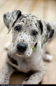 I want a fur-baby that looks like this cute little guy!! Beautiful!