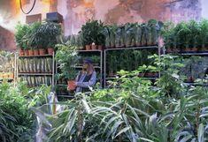 """Envie de créer votre propre urban jungle ? Découvrez vite la toute nouvelle vente de plantes """"Plantes pour Tous"""" qui aura lieu en Avril à Marseille !"""