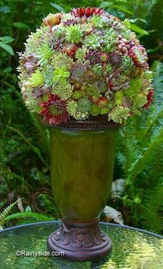 Succulent Ball DIY