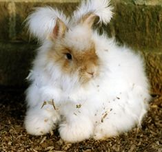 Cupid Says, 'Be a Bunny's Honey!' (Photo List) | Features | PETA