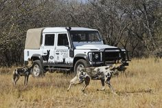 Defender of Wild Dogs....Land-Rover-South-Africa