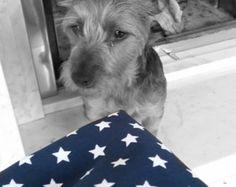 Dog bandana/scarf blue and white stars