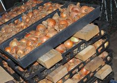 Grow onions from seed with seed breeder Don Tipping of Siskiyou seeds.