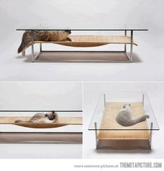 The latest news in coffee table design…