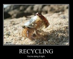 Recycling ~ It's sad that this little guy has to do this but at least he's recycling.