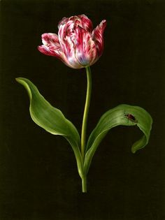 This tulip seems more real than one in the garden.