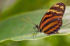 """500px / Photo """"Butterfly farm"""" by martial Dekker"""