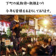 Iriya Asagao Matsuri (Morning Glory Festival) / Official Tokyo Travel Guide GO TOKYO