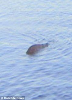 Is that you Nessie? George Edwards claims this is the bashful beast he has hunted every day for the last 26 years