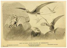 008- Extinct monsters…1896- H. N. Hutchinson