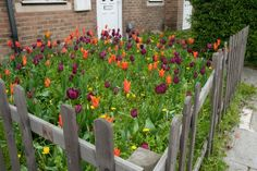 Bold single species planting can have an uplifting effect on all passers by. Tulipa Ballerina and T. Finsbury Park, Knock On The Door, Dog Show, Guerrilla, Autumn Inspiration, Permaculture, Garden Projects, Tulips, Shed