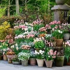 På besøg i majhaven hos Kig med indenfor. // We have been paying Claus Dalby a visit in the beautiful May garden. Tulips Garden, Garden Bulbs, Garden Pots, Planting Flowers, Container Plants, Container Gardening, Beautiful Gardens, Beautiful Flowers, Narcissus Bulbs