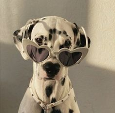 Cute Funny Animals, Cute Dogs, Cream Aesthetic, Photography Challenge, Cute Animal Photos, Oui Oui, Akira, Aesthetic Pictures, Life Is Good