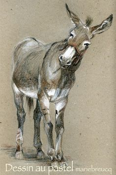 Pencil Art tis not a horse, but they're in the same family :) - Art Pastel, Pastel Drawing, Painting & Drawing, Horse Drawings, Animal Drawings, Art Drawings, Equine Art, Western Art, Horse Art