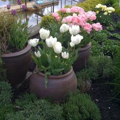 Container Plants Design Ideas, Pictures, Remodel, and Decor - page 2