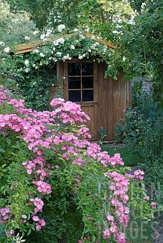 ROSA_MARIA_LISA_ROSE_AND_ROSA_GARDENIA_ROSE_SHED_GARDEN_OF_ANDR_EVE_PITHIVIERS_LOIRET