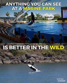 Freedom will always, always be more beautiful.  #EmptyTheTanks #CaptivityKills #OrcasOfIG #peta2life