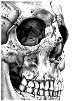Incredible, detailed skull black and white drawing.