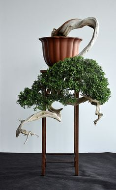 Juniperus Chinensis - Clemens Marso. Bonsai-art, bonsai-tree, bonsai-Japan, bonsai.