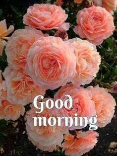 Good Morning Flowers Pictures For Whatsapp - WallpapersClubs. Good Morning Flowers Pictures, Good Morning Beautiful Pictures, Good Morning Picture, Morning Pictures, Flower Pictures, Flower Images, Morning Pics, Beautiful Images, Good Morning Dear Friend