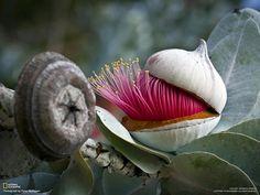 L'image du jour : Fleur d'Australie