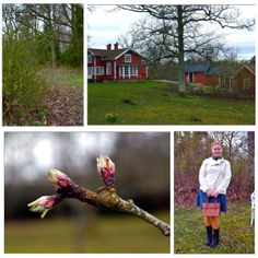 VisaLiza            : Hagalund trädgård om våren