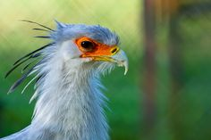 A secretary bird. I'm told it can average 70 words a minute . . . . .  © Stephen Johnson Photography