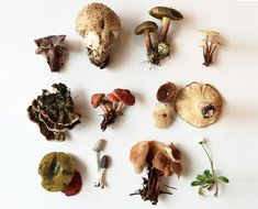 Curious about wild mushrooms? The Chalkboard chats with Rachel Box about the basics of mushroom foraging...